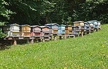 Apiculture wikip dia - Avoir une ruche dans son jardin ...
