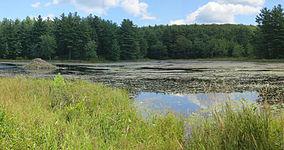 Ruggles Pond.JPG