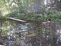 Runeberg Spring.jpg