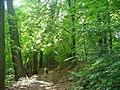 Ruppiner See - Uferweg (Ruppin Lake - Bankside Path) - geo.hlipp.de - 39782.jpg