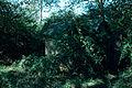 SC Ray Ashland Farm 1971 01.jpg