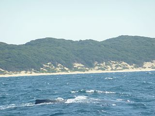 A National Park with marine protected area on the northern KwaZulu-Natal coast of South Africa