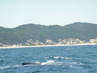 Sodwana Bay - View of a beach in the bay with a humpback whale in the foreground