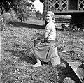 S štanco v stopi touče- čisti ječmen (da odstrani rozine), Visejec 1957.jpg