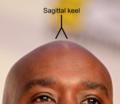 Sagittal keel.png