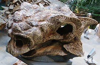 Saichania - Cast of holotype skull GI SPS 100/151