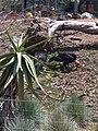 San Diego Zoo Vulture.jpg