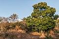 San Juan Valley Forest.JPG
