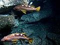 Sanc1744 - Flickr - NOAA Photo Library.jpg