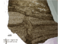 Sanctuary Shale Formation thin-section.png