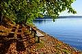 Sandvika fall day (Unsplash).jpg