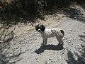 Santa Elena, perros vagos. - panoramio - R.A.T.P. (4).jpg