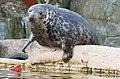 Seal Image 3.jpg