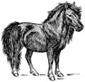Shetland pony (PSF).png