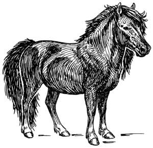 Line art drawing of a Shetland pony