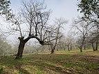 Sierra de Aracena - Castaños 01.jpg