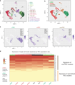 Single-cell RNA sequencing of freshly isolated TEC defines common cell clusters to mTEC and cTEC that are maintained in vitro.webp