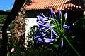 Sintra - Portugal 34 (37065636285).jpg