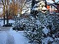 Snö i Varberg 2010 b.jpg