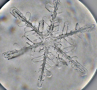 Snowflake viewed in an optical microscope Snowflake - Microphotograph by artgeek.jpg
