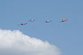 Socata TB-30 Epsilon leads Beech T-34B Mentors Chevron Pass 01 TICO 13March2010 (14598880192).jpg