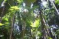 Spice garden, Goa.jpg
