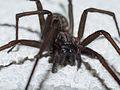 Spider A.jpg