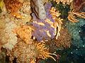 Sponge and sea fan at Middelmas PA208655.JPG