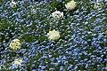 Spring in London (7113818103).jpg