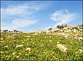Spring in Winter بهار در زمستان - panoramio.jpg