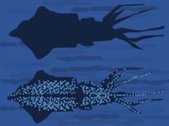 Squid Counterillumination