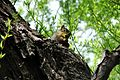 Squirrel-1286.jpg