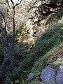 Starr-020221-0037-Erigeron karvinskianus-habit in streambed-Polipoli-Maui (23918431694).jpg