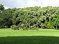 Starr-091104-0691-Pritchardia arecina-habit-Kahanu Gardens NTBG Kaeleku Hana-Maui (24360615833).jpg