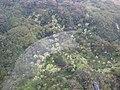 Starr-091120-0021-Aleurites moluccana-aerial view-Koolau Forest Reserve East Maui-Maui (24363470993).jpg