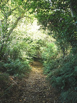 Start of the path to Lewesdon Hill - geograph.org.uk - 971135