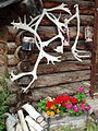 Still Life with Caribou Antlers and Sleigh - Arctic Chalet Hotel - Inuvik - Northwest Territories - Canada-fd0000.jpg