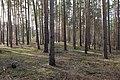 Stolper Weg Siedlung Kleinmachnow 2021-02-24 09.jpg