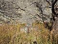 Stone monument of iwahana kyorai.jpg