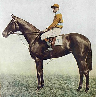 Straitlace British-bred Thoroughbred racehorse