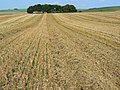 Straw and stubble north-east of Avebury - geograph.org.uk - 970745.jpg