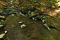 Stužická rieka, Národná prírodná rezervácia Stužica, Národný park Poloniny (03).jpg
