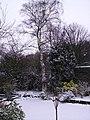 Suburban Garden 2 - geograph.org.uk - 135824.jpg