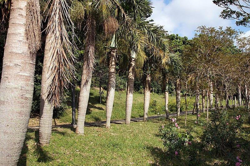 File:Sueyoshi Park Naha Okinawa Japan07s3.jpg