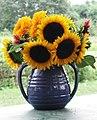 Sunflowers in blue jug (284583056).jpg