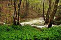 Susara river - panoramio (2).jpg