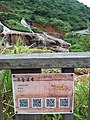 TW 台灣 Taiwan 新北市 New Taipei 瑞芳區 Ruifang District 洞頂路 Road 黃金瀑布 Golden Waterfall August 2019 SSG 18.jpg