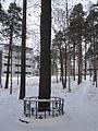 Taavetti Lukkarisen hirttopuu.JPG