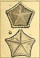 Tableau encyclopédique et méthodique des trois règnes de la nature (1791) (14764918771).jpg