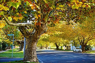 Seymour, Victoria Town in Victoria, Australia